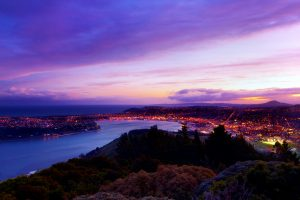 dunedin property investment